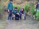 Reintroducen medio millar de cangrejos autóctonos en el río Darro