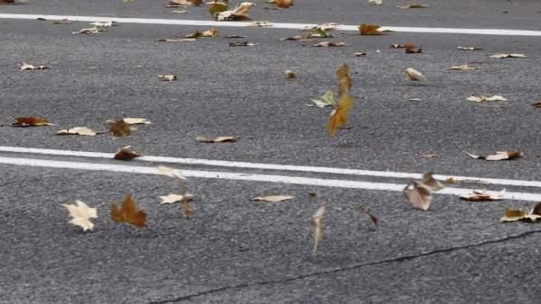 Viento, hojas, otoño, rachas