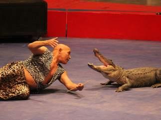 Luchador de cocodrilos