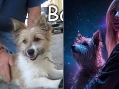 La conmovedora historia de Max, el perro de la Lotería de Navidad