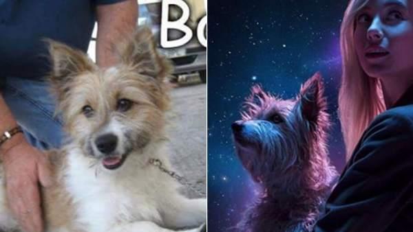 Max, el perro del anuncio de la Lotería 2017