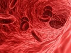 Glóbulos rojos de la sangre