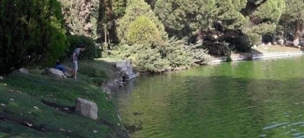Vacían El Lago De La Casa De Campo Para Limpiarlo Y Repoblarlo Con Peces Autóctonos