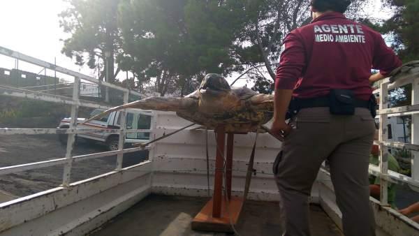 Incautación de la tortuga