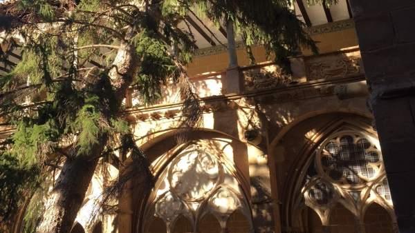 El árbol se ha caído sobre uno de los laterales del claustro de Veruela