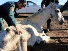 Uno de los caballos abandonados y desnutridos en Lucena del Puerto (Huelva)