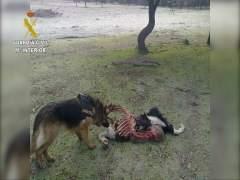 La Guardia Civil detiene a 16 personas por el uso ilegal de venenos para la caza