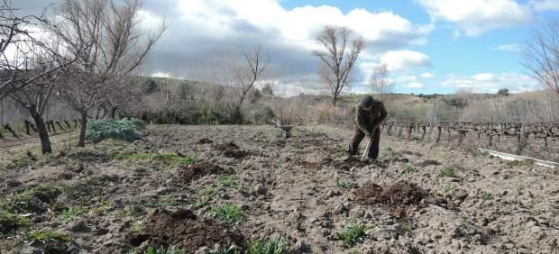 La Consejería de Agricultura inicia el pago de 32,4 millones de euros de la PAC al campo granadino