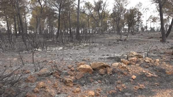 Incendio Campillo de Altobuey