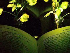 Científicos del MIT logran que una planta doméstica emita luz