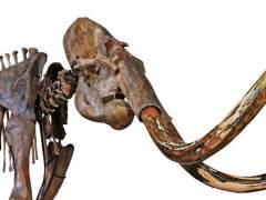 Un esqueleto casi completo de un mamut es vendido por 548.250 euros