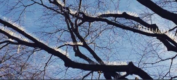 Pinchos en árboles en Bristol