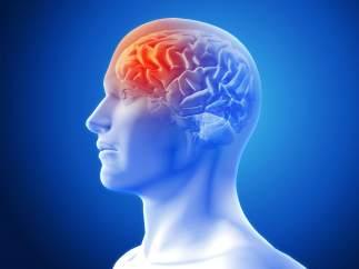 Tu cerebro es el que más sufre