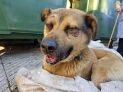 Encuentran a un perro apaleado brutalmente y metido en un cubo de basura en Oviedo