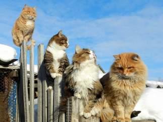 La Tierra de los Gatos existe