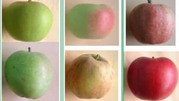 Manzanas del CITA