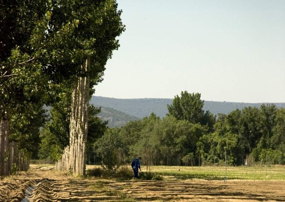El vivero de la diputaci n provincial ofrece a los for Viveros de arboles en madrid