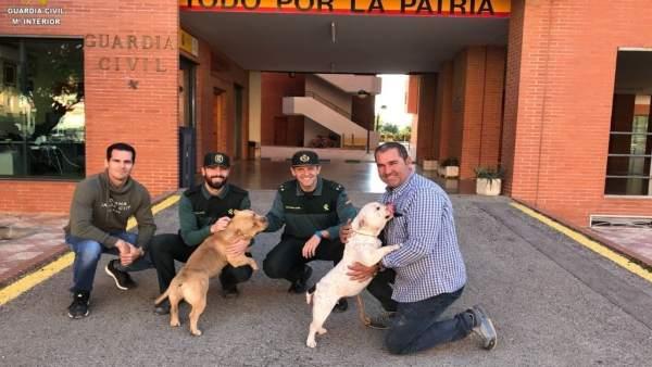 Perros recuperados