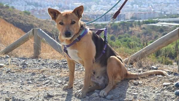 Perro en adopción protectora de animales málaga abandonado can animales