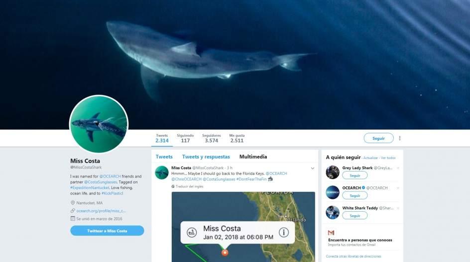 'Miss Costa', un gran tiburón blanco de 726 kilos que tiene cuenta de Twitter, visita Florida