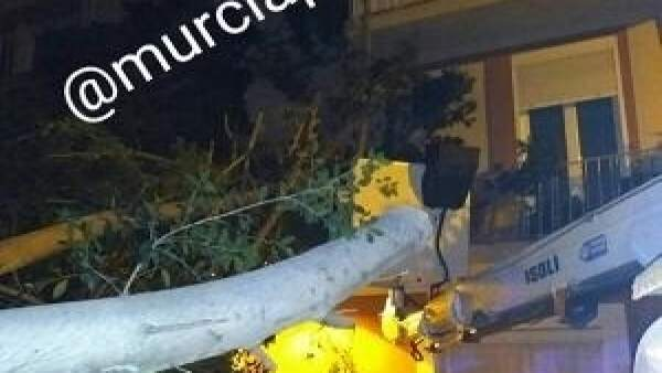 Rama ficus cae fachada edficio Murcia