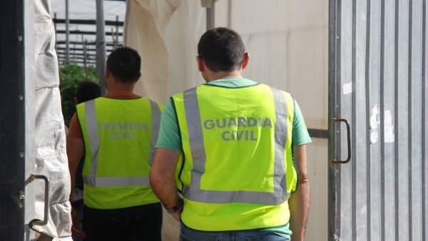 La Guardia Civil inspecciona el invernadero forzado