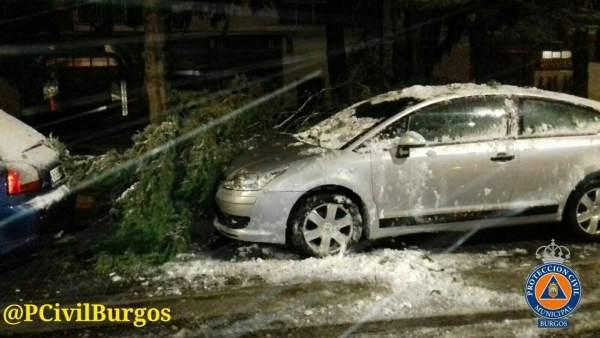 ÞÁrboles rotos en Burgos por la nieve y el viento