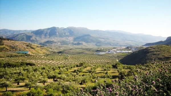 Paisaje de olivar de Sierra mágina