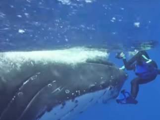 Una ballena filmada salvando a un buzo del ataque de un tiburón.