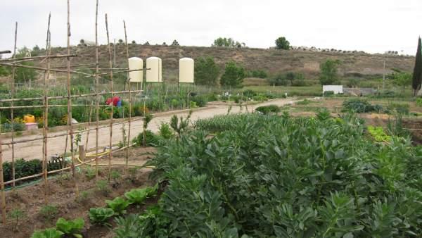 Imagen de los huertos de ocio de Logroño
