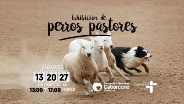 Cartel del anuncio de las exhibicciones de perros pastores