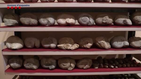Algunos restos encontrados en estanterías del domicilio de los expoliadores