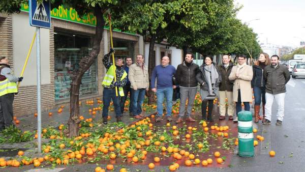 Presentación de la campaña de recogida de naranjas