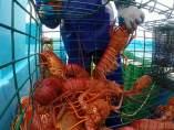 Captura de langostas en el mar