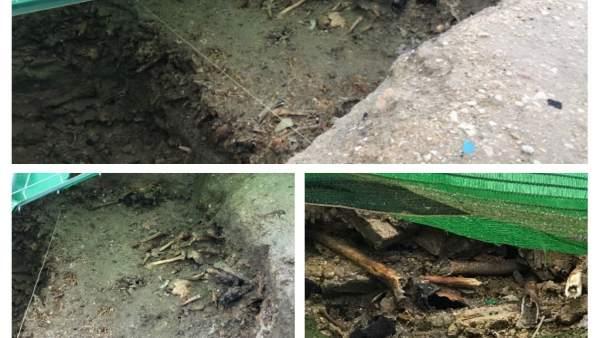 Fosas del cementerio de Lucena que se exhuman