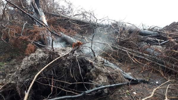 Turbera ardiendo en la Lagoa da Antela