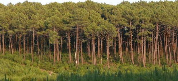 Bosque de las Landas