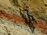 Descubren una nueva especie de titanosaurio