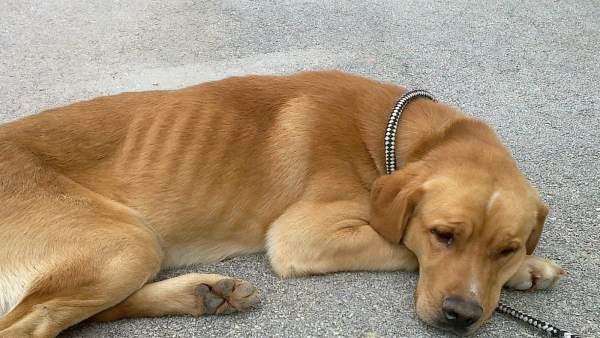 Perro acogido en el refugio de la Protectora de Animales