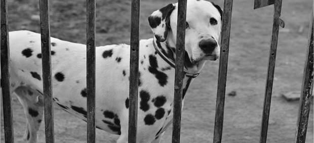 Perro en perrera