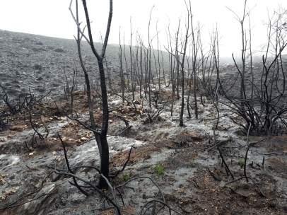 Escorrentías y arrastre de cenizas en la Serra da Meda en Ourense tras incendios