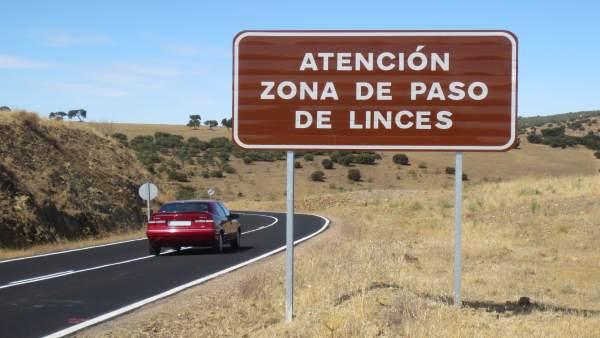 Carretera, coches, linces, tráfico, vehículos, viaje, vacaciones