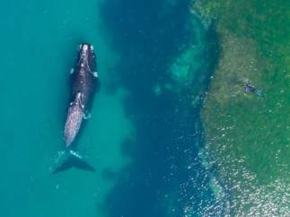 Nadando con una ballena