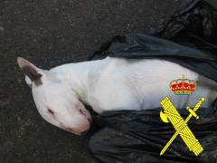 Bull Terrier muerto