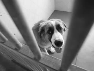 Perro Abandonado En Una Perrera