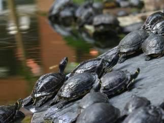 Tortugas abandonadas