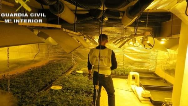 Desmantellen un cultiu de 955 plantes de marihuana amagades en una vivenda de L'Eliana (València)