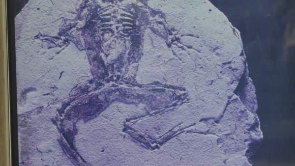 Imagen de uno de los fósiles hallados en el municipio de Libros (Teruel)