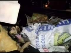 Encuentran varios perros muertos para un restaurante chino