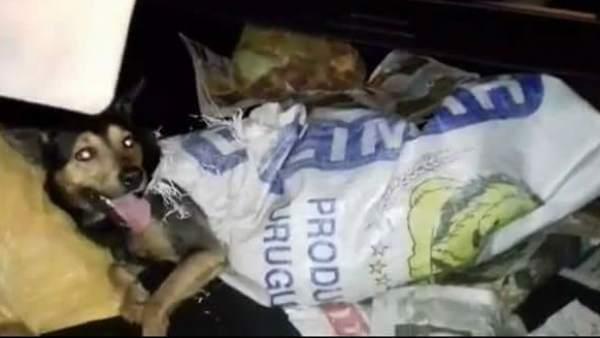 Un perro junto a cadáveres